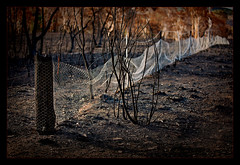 Sunset on the fireground  -  [#2 of 5] (Kevin Rheese) Tags: carwoola whisk bushfire destruction devastation fire disaster whiskerscreekroad fence