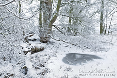First snow in Wensleydale, Yorkshire Dales (Wend's photography) Tags: winter winterscape snow snowscape wensleydale yorkshire yorkshiredales northyorkshire england woods woodland forest trees landscape wendsphotography wwwwendsphotographycouk fine art atmosphere britain national park rural scenery uk