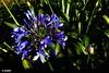 1.241 -  Heart flowers (esnalar) Tags: flor flores naturaleza móvil corazón olvido olvidada flower flowers nature mobile heart oblivion forgotten
