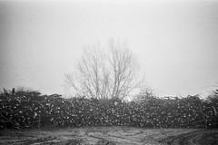 (mariuszlemiecha) Tags: pentaxespio928 ilfordhp5 landscape ursynów warsaw analog blackandwhite
