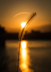 Wheat (MrLoveland) Tags: sunset winter silhoutte water reflection reflections sun plants delaware canon