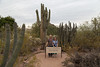Desert_Road_Trip-4624 (smithjustind) Tags: arizona newyears2018 roadtrip robyn
