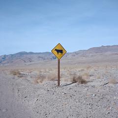 where's the beef? mojave desert, ca. 2018. (eyetwist) Tags: eyetwistkevinballuff eyetwist sign cow cattle beef keeler california mojavedesert mamiya 6mf 75mm kodak portra 160 mamiya6mf mamiya75mmf35l kodakportra160 ishootfilm ishootkodak analog analogue film mamiya6 square 6x6 120 filmexif epsonv750pro mediumformat lenstagger mojave desert highdesert landscape roadsideamerica americana americantypology signgeeks icon silhouette minimalist empty wheresthebeef moo warning yellow roadsign steer grazing range inyo owenslake iconography