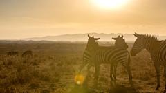 Nairobi-Nationalpark-1906 (ovg2012) Tags: kenia kenya nairobi nairobinationalpark