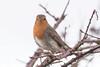 Robin (Dougie Edmond) Tags: bird birds nature water burn sun wildlife