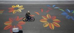 (cherco) Tags: composition composicion canon city ciudad color street calle canoneos5diii bike bicicleta bicycle flower road carretera man petals petalos colour paris france park carril rail alone lonely solitario silueta silhouette urban