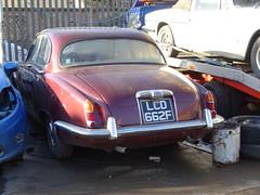 1968 Jaguar Sovereign 4.2 (Neil's classics) Tags: vehicle abandoned car 1968 jaguar sovereign 42