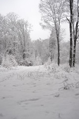 Winter Wonderland (Kitty Terwolbeck) Tags: netherlands veluwe veluwezoom nationalpark nationaalpark sneeuw snow winter woods forest trees hiking wandeltocht wandeling wandelen walking cold snowy landscape nature