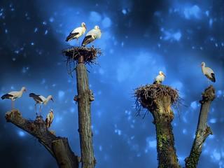 IMG_6995 The stork tree
