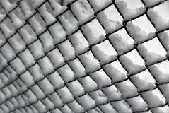 Be like the snow... (Dikke Biggie.) Tags: happyfencedfriday hff fencedfriday fence fenced fencing hek hekwerk omheining friday vrijdag snow snowy sneeuw besneeuwd winter square squares vierkant vierkanten triangle driehoek blackandwhite bw black white zwartwit zw zwart wit monochrome monochroom closeup detail macro dof depthoffield scherptediepte canon canong1xmarkii repetition herhaling landgoedtewerve rijswijk canonnl dgawc