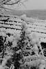 Boule de plante (zuhmha) Tags: bulgarie bulgaria winter hiver mogilovo tree sky neige snow silhouette line lignes courbes curve geometry géométrie arbre ciel