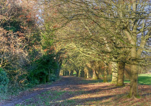 Hearsall Common_Earlsdon_Coventry_Jan18