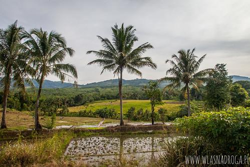 Sumatra Północna