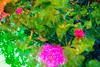 20171030-123 (sulamith.sallmann) Tags: natur pflanzen blossom blume blur blüte blüten botanik effect effekt filter flower folie folientechnik italia italien italy messina nature pflanze plants sizilien tindari tyndaris unscharf vivid it sulamithsallmann