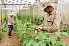 NP-seed regeneration Popayan 24