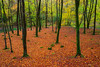 Barton Wood (snowyturner) Tags: lyn river exmoor leaves autumn fall naturist