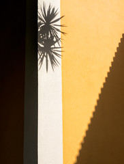 'Pyrotechnics' (Canadapt) Tags: wall shadow corner tree abstract loures portugal