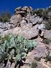 Flora - Arizona - Yavapai County (Mike's Mode (Miguel H.)) Tags: flora desert arizona cactus cholla yucca agave mammillaria echinocereus