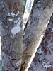 Tree Macro. (dccradio) Tags: lumberton nc northcarolina robesoncounty outside outdoors nature natural tree trees backyard treetrunk bark hewlettpackard hp cb350