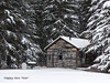 Happy New Year, everyone! (annkelliott) Tags: alberta canada nwofcalgary nofcochrane cochranewildlifereserve annualaudubonchristmasbirdcount acreage farm myrafamily forest tree trees coniferous snowcovered shed house cabin building wooden attractive snow snowing scene winterscene rural ruralscene outdoor winter 29december2017 fz200 fz2004 p1280226 annkelliott anneelliott ©anneelliott2017 ©allrightsreserved beautifulexpression