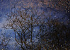 night sky (lowooley.) Tags: allendale northpennines northernengland woods trees puddle