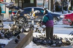 Feeding the pigeons (jer1961) Tags: toronto birds pigeons feeding feedingpigeons feedingbirds bloorstreet