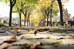 Hallowed (Joe Daly) Tags: leica leicam leicamtyp240 leicam240 photography camera 35mm summicron photographer paris couleur color cemetery death graves leaves trees pèrellachaisecemetery pèrelachaise graveyard tombs leaf autumn fall travel