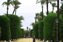 Parque Genovese (hans pohl) Tags: espagne andalousie cadix nature allées plantes plants arbres trees