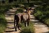 Light and Shade (Deepu Cyriac) Tags: nature nilgiribiosphere nagarhole nagarholenp karnataka kabini travel wildlife westernghats tiger bigcat bengaltiger royalbengaltiger tigress indianforest