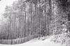 georgia white winter-- (Ken B Gray) Tags: winter snowstorm d700 georgiapines