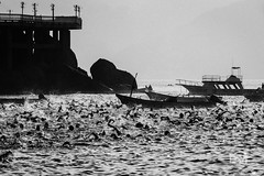 Cardumen humano (Davo Marto) Tags: acapulco guerrero méxico beach blackandwhitephotography competition maratonguadalupano ocean sea sports water waterswimmers