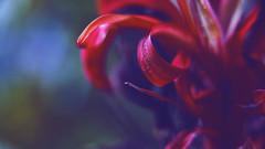 Eldrazi Plant 👾👾👾 (Vincent Monsonego) Tags: sony α αlpha alpha ilce7rm2 a7rii a7r2 zeiss sonnar t fe 55mm f18 za sel55f18z prime lens alien plant flower eldrazi macro kenko extension tube mtg