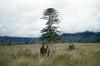 terLaag-209-1-068b (Stichting Papua Erfgoed) Tags: baliem pietterlaag
