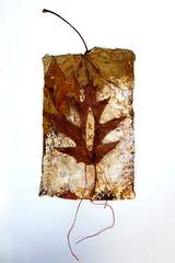 stitched-leaf (bgmills) Tags: environmentalart landart bookart artistbook natureinart artinnature artonthetrail outdoorartinstallation