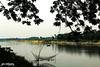 Utopia on Earth (shamahzoha) Tags: nature landscape river water boats shade shadow trees grass greenery green bank shore horizon distant colorful beautiful beauty beautifulbangladesh bangladesh vibrant colors 7dwf