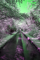 Old London Road Snow, Greem Sky