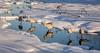 Wintry Gathering Place (Wes Iversen) Tags: antigonecanadensis brighton gruscanadensis kensingtonmetropark michigan milford nikkor18300mm sandhillcranes birds ice nature snow water wildlife winter