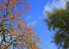 Nature (Kay Harpa) Tags: thebiggestgroup ailleurs transition ciel nature