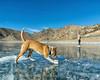 IMGP8112-Edit (Matt_Burt) Tags: bluemesareservoir dog hockey ice lake puck reservoir river skate
