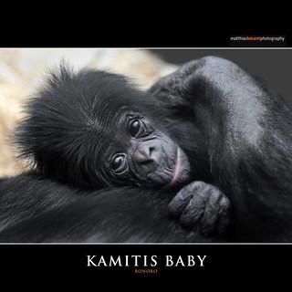 KAMITIS BABY