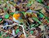Bobby the Robin (2) (eric robb niven) Tags: ericrobbniven scotland dunkeld robin wildlife nature