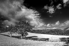 Infrared Black & White Trees & Sky