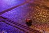Mon bouchon (remi ITZ) Tags: sourcefraichecom sourcefraiche remi parismylove parismonamour paris loveparis ithorotz photooftheday d7200 nikon remiitz remiithorotz champagne bouchon cork fun party place concorde grande roue ferris wheel obelisque obelisk