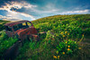 Dalles Mountain Ranch II (PNW-Photography) Tags: dalles mountain ranch dallesmountainranch dallesmountain columbiariver columbiarivergorge washington car auto automobile abandoned old vintage rusty rust