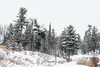 Back-To-Reality (Nataša Bandović) Tags: snow winterday forest trees ottawatrails cold natasabandovic natasabandovicphotography photography canondslr canon canonphotography ontario yourstodiscover trails hiking winterbeauty
