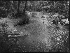 tributary, French Broad River, Warren Wilson College, Black Mountain, North Carolina, Mamiya 645 Pro, mamiya sekof 80mm f-2.8, late spring 2017 (steve aimone) Tags: tributary river frenchbroadriver landscape warrenwilsoncollege blackmountain northcarolina mamiya645pro mamiyasekor80mmf28 mamiyaprime primelens 120 film 120film mediumformat blackandwhite monochrome monochromatic aristaedu200 moerschecofilmdeveloper