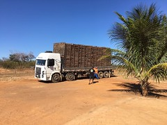"GWD Forestry Brazil eucalyptus harvesting <a style=""margin-left:10px; font-size:0.8em;"" href=""http://www.flickr.com/photos/47172958@N02/38556147955/"" target=""_blank"">@flickr</a>"