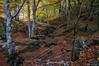 El sendero intuitivo (SantiMB.Photos) Tags: 2blog 2tumblr 2ig fotohiking urederra nacederodelurederra urbasa río river otoño autumn bosque forest camino way path sendero geo:lat=4279839800 geo:lon=213221915 geotagged baquedano navarra españa esp