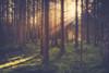 Further Into The Woods - 4/365 (der_peste) Tags: forest sunlight sunbeam crepuscularrays trees woods woodland sunrays mist fog foggy misty bavaria germany sonya7ii sel2470gm