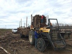 "GWD Forestry timber harvest Btrazil 2017 <a style=""margin-left:10px; font-size:0.8em;"" href=""http://www.flickr.com/photos/47172958@N02/38726091954/"" target=""_blank"">@flickr</a>"